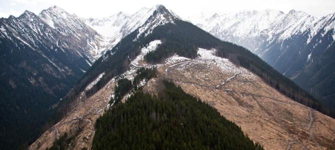 O mare victorie a societății civile: Forumul Pădurilor – de la tăieri ilegale la protecție și gestionare responsabilă