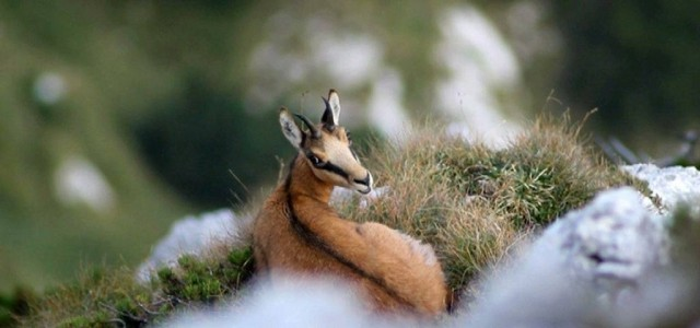 Campanie TVR1 – Carpaţii, plămânul Europei – focus pe ariile naturale protejate ale României