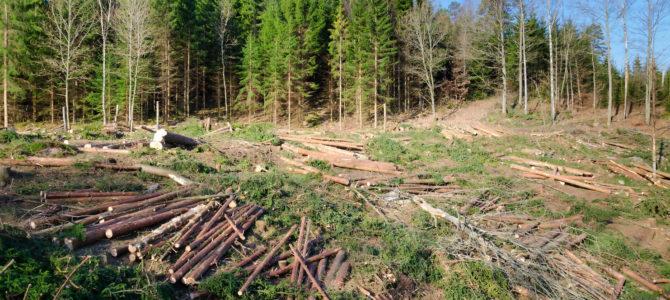 Parlamentarii sunt pe cale să împingă România într-o procedură de infringement declanşată de Comisia Europeană pe tema tăierilor ilegale de arbori