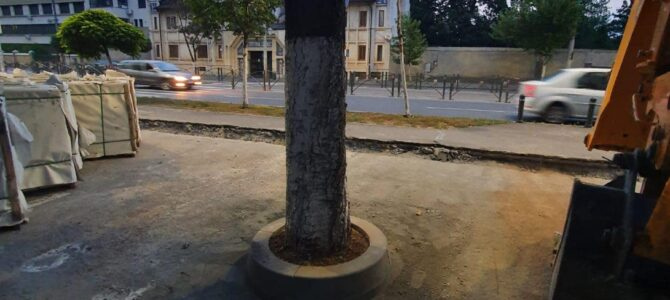 Primarul Băluță a îngropat toți arborii de la Cimitirul Bellu!